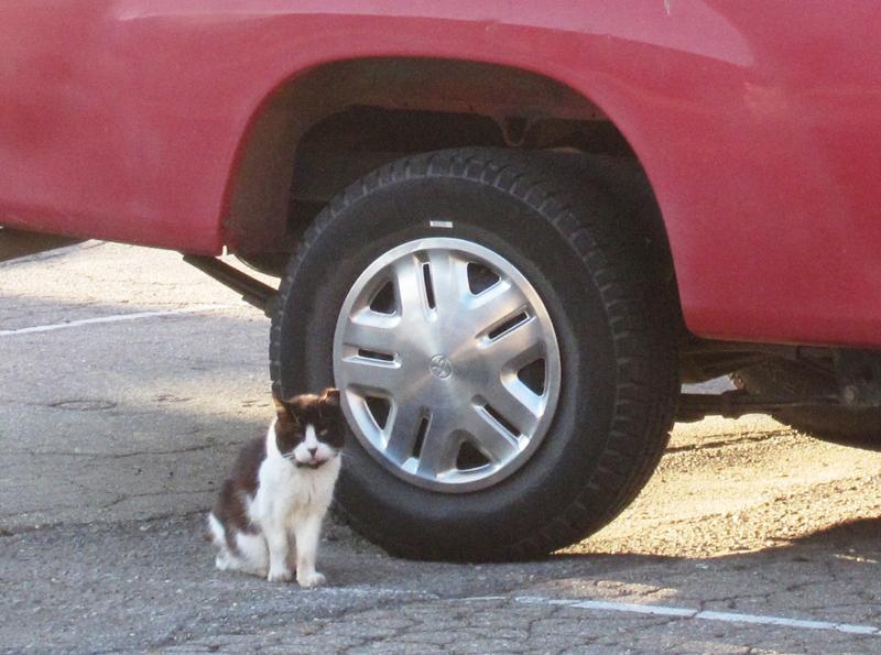 truck-kitty