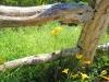 fence-inwatercolorweb